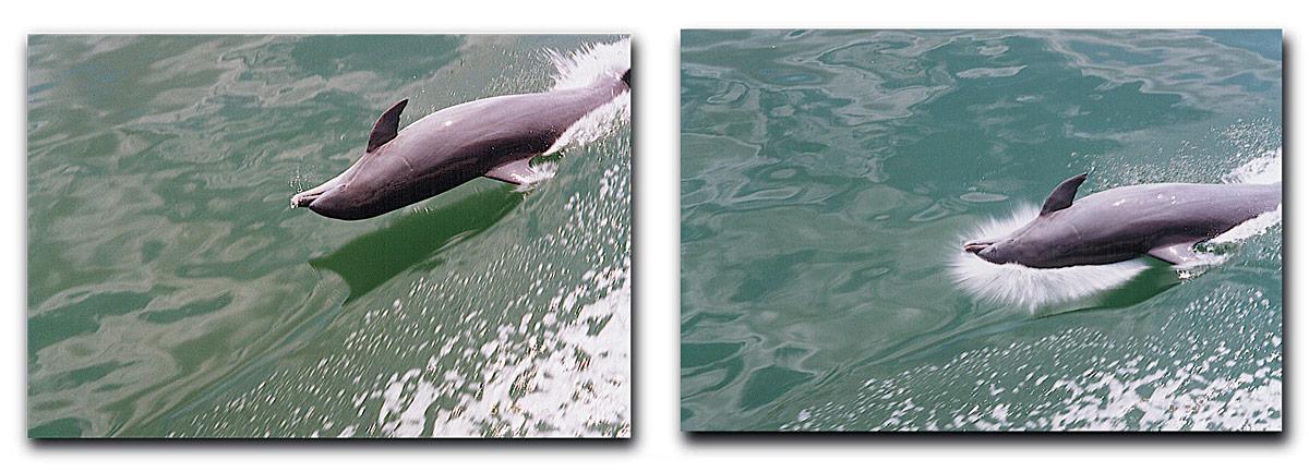 american_windsurfer_4.4_hoyle_schweitzer_Dolphin